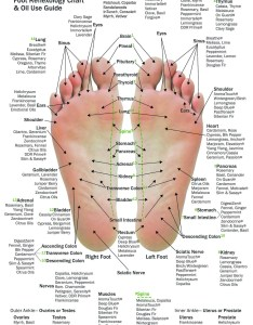 Image also pack mini essential oil reflexology chart  use guide etsy rh