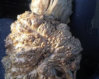 Burls For Sale Uk