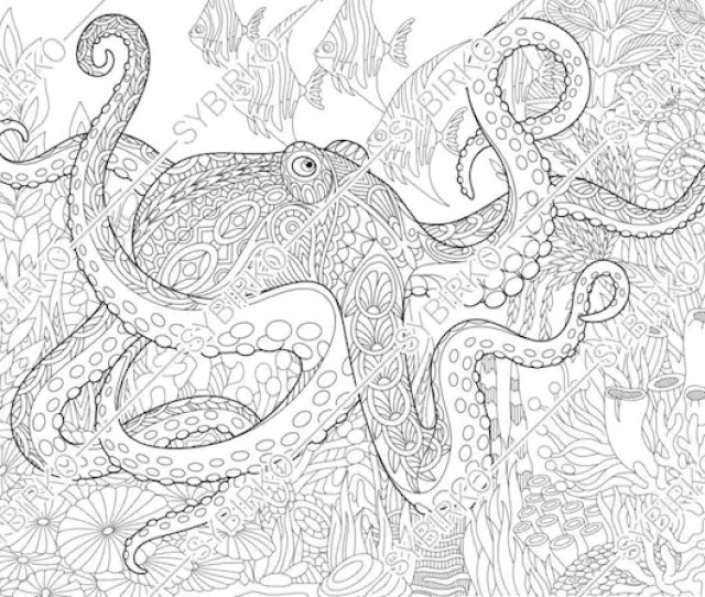 Coloring Pages For Adults Sea Octopus Adult Coloring Pages Etsy