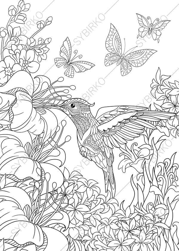 Hummingbird. 3 Coloring Pages. Animal coloring book pages