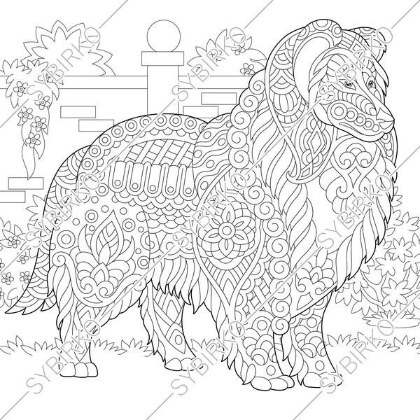Coloring pages for adults. Rough Collie. Shetland Sheepdog