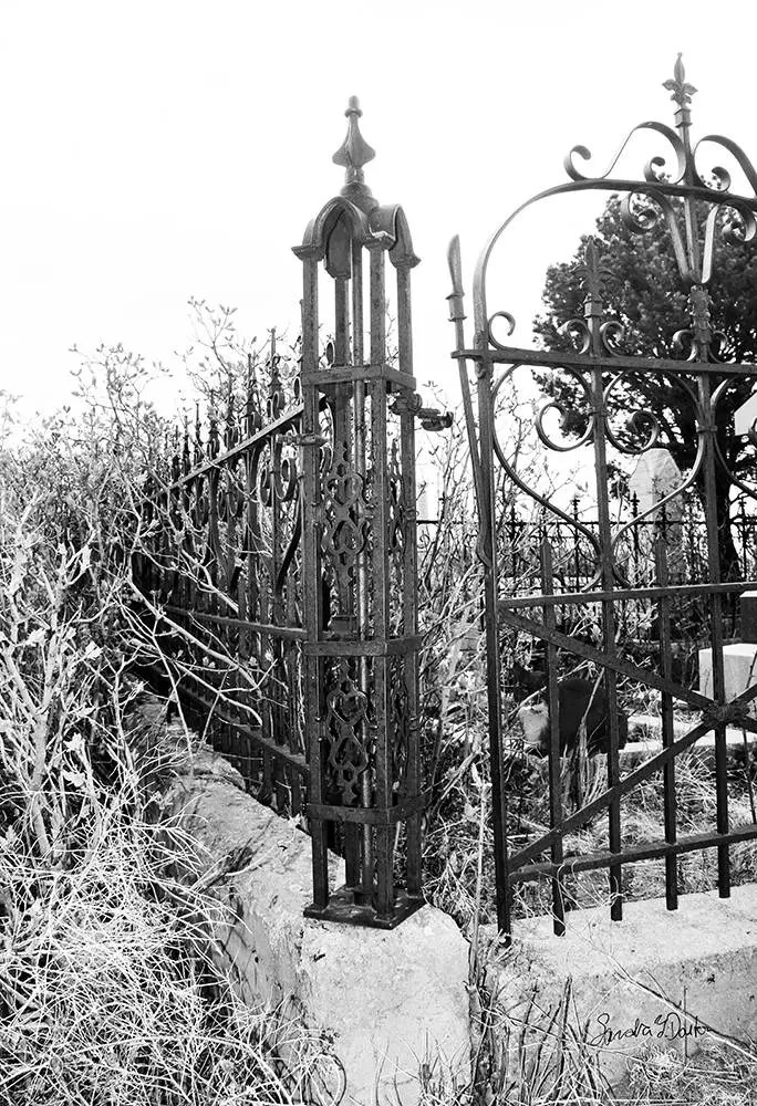 Cemetery Fence and Cat, B...