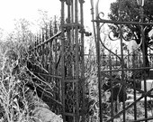 Cemetery Fence and Cat, Black & White Photography, Fine Art Photography, Digital Download, Printable Wall Art, Instant Download, Cat Photo