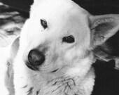 Black and White Dog Photo...