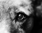 Dog Art, Black and White Dog Photography, Digital Download, Printable Wall Art, Veterinary Office Art, Home Décor, Instant Download