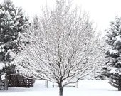 Snow Photo, Tree in the Snow, Square Photo, Digital Download, Printable Wall Art, Home Décor, Instant Download,