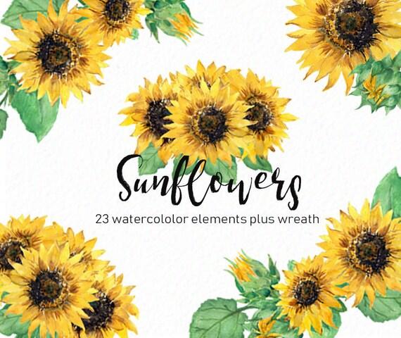 sunflower clip art watercolor sunflowers