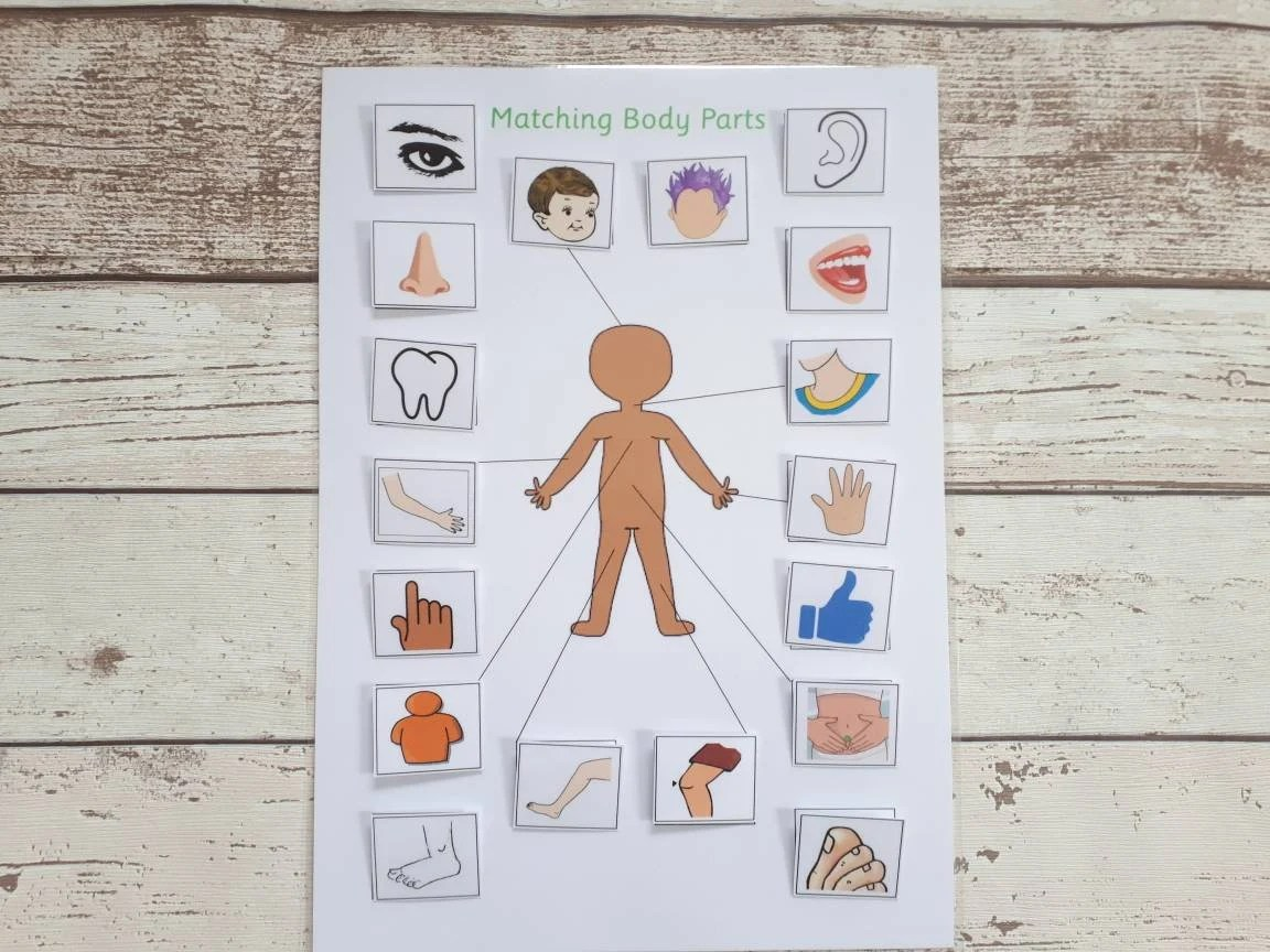 Body Parts Matching Game Activity For Toddlers Learn Body