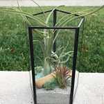 Glass Geometric Terrarium With Air Plants Kit To Make Etsy
