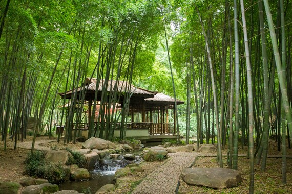 Bamboo Forest China Bamboo House In Bamboo Forest Metal Print Landscape Wall Art Decor Fine Art