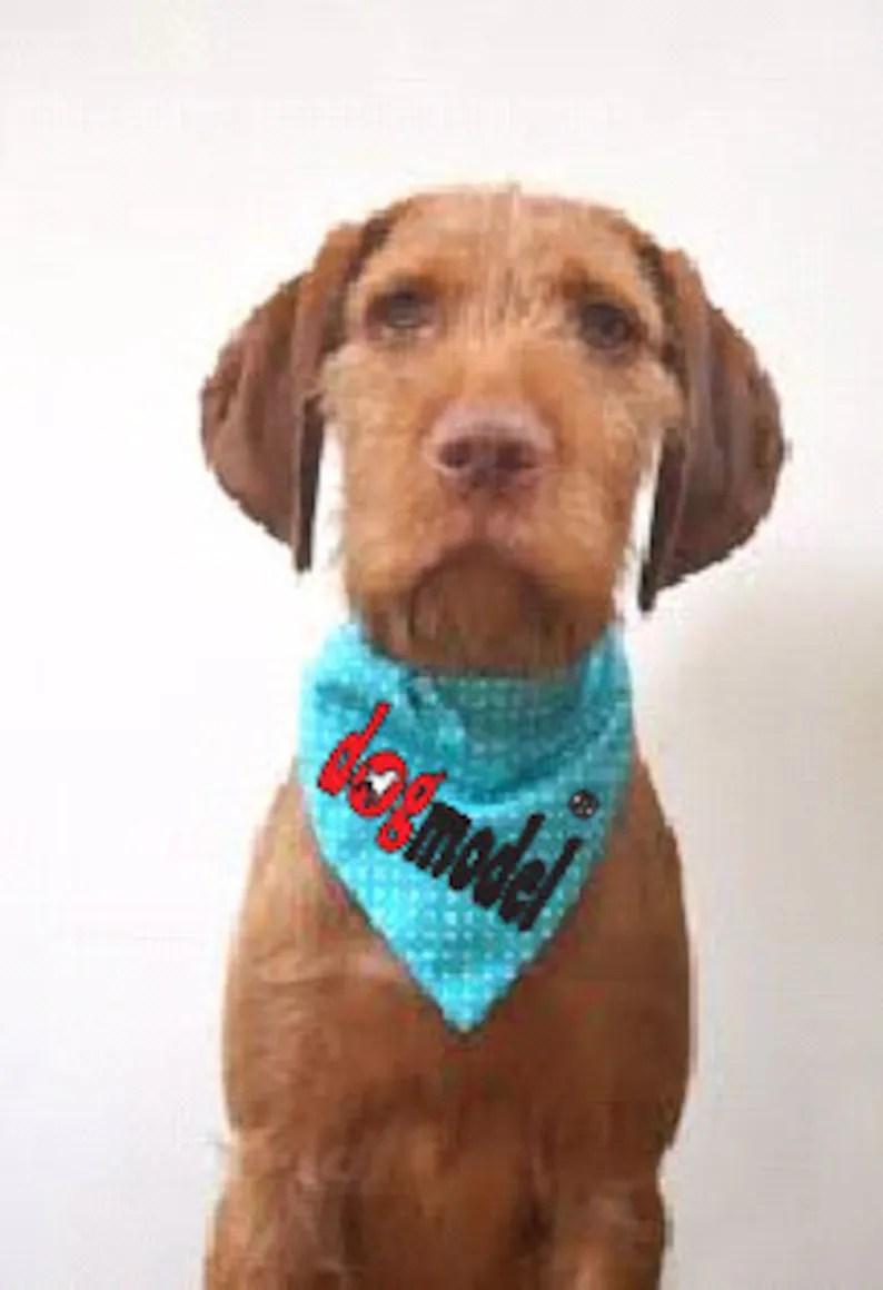 Download I Love camping-Lucky dog svg svg file Sublimation high   Etsy