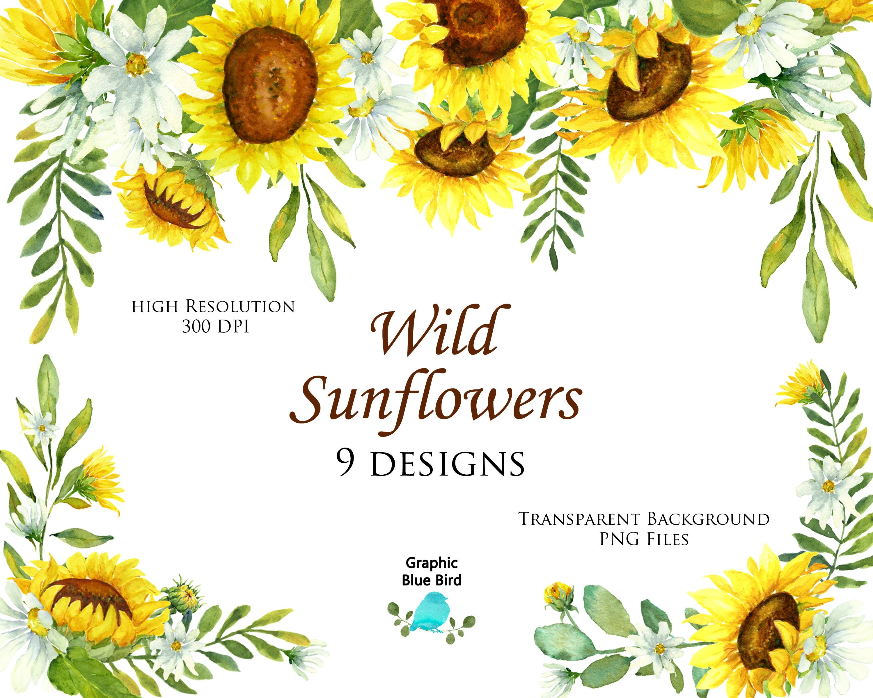 Fall Sunflower Wallpaper Wild Sunflower Designs Set Includes Nine Watercolor