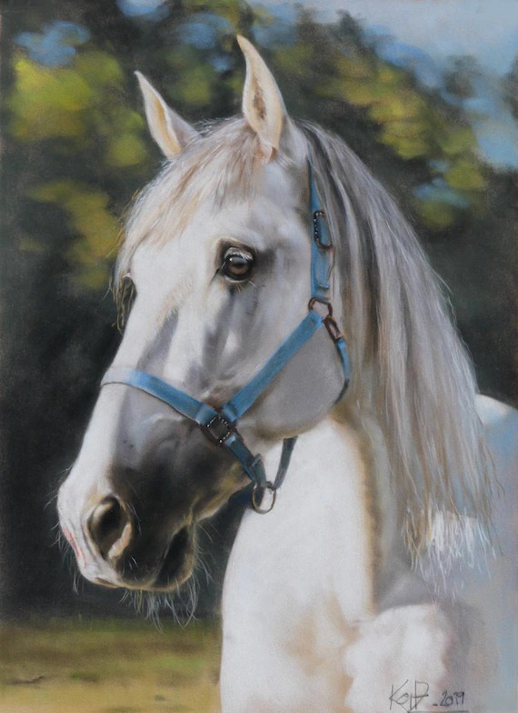 Full Body Horse Drawing : horse, drawing, Pastel, Drawing, Photo, Horse, Portrait