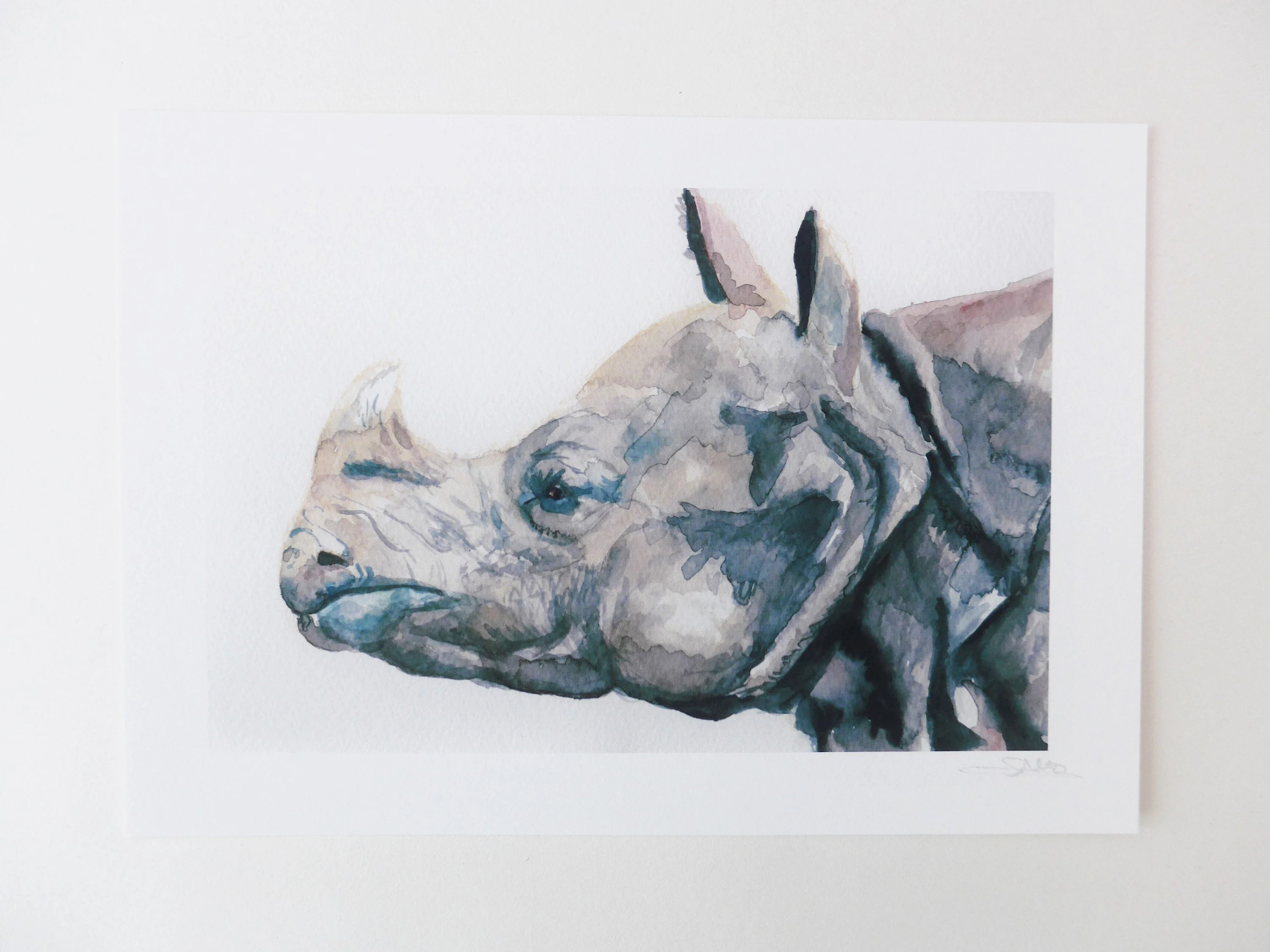 rhino watercolour painting animal