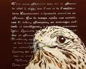 The literary hawk