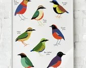 Pitta Birds Family- Nature Gift - Wall Art / Decor - Kids Room Decor - Bird Illustration - Size A4 / A5 Digital Print