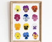 Botanical Pansies Variety Chart - Giclée Art Print