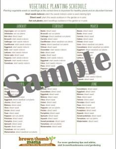 Zone vegetable garden planting schedule also etsy rh
