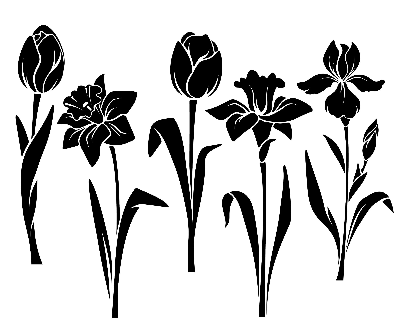 Tulip Narcissus Iris Flower Spring