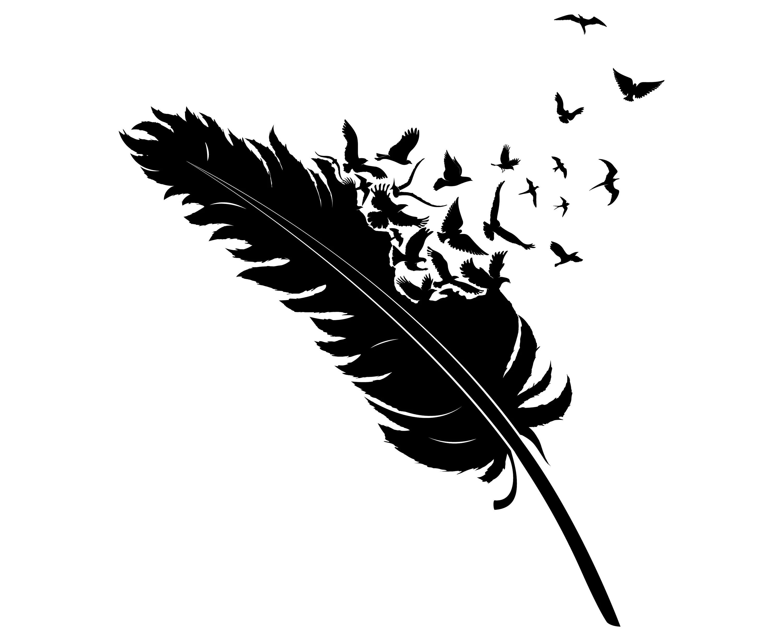 Feather Birds Bird Flying Fly