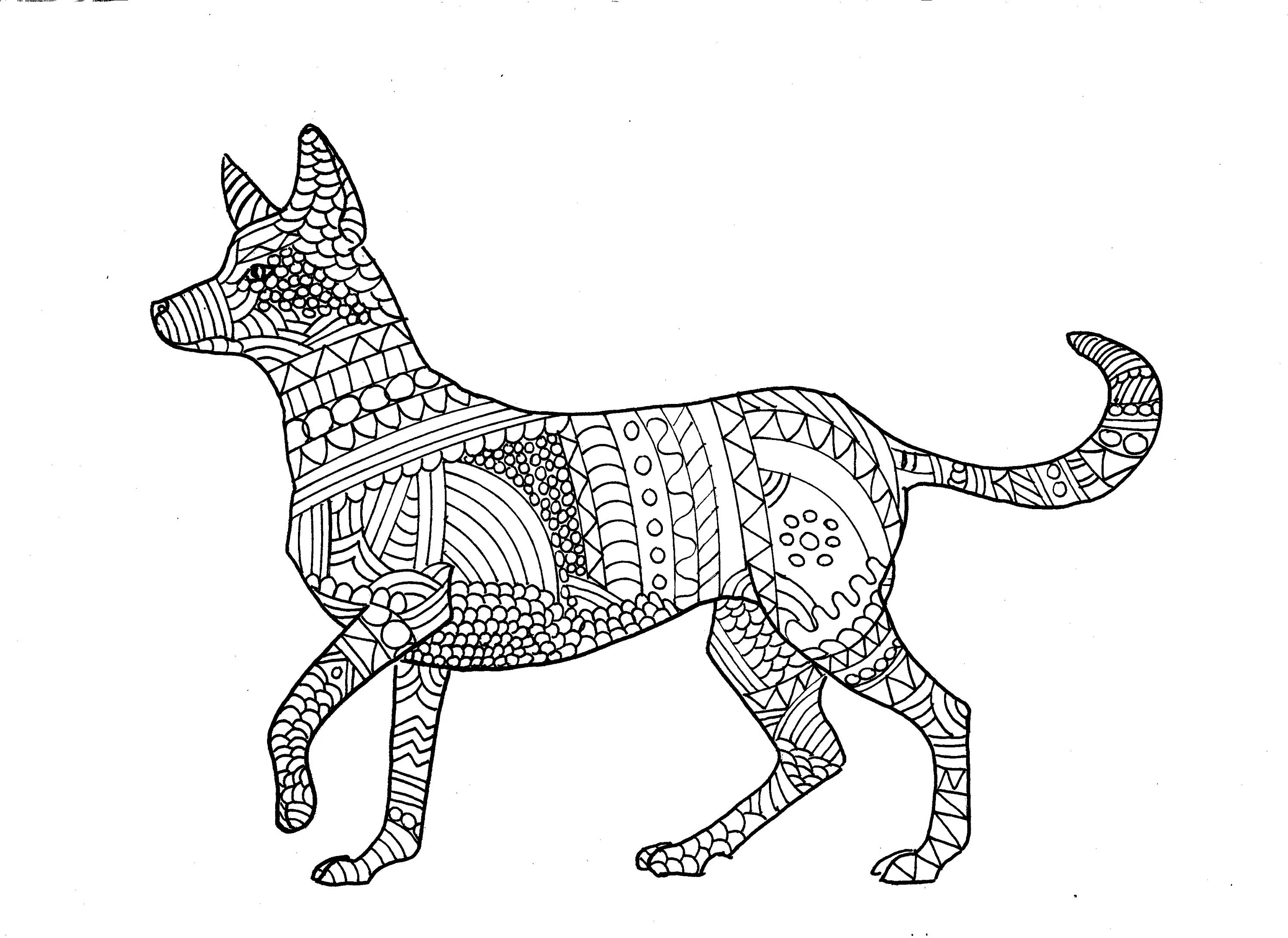 Dingo Colouring Page digital download digital product