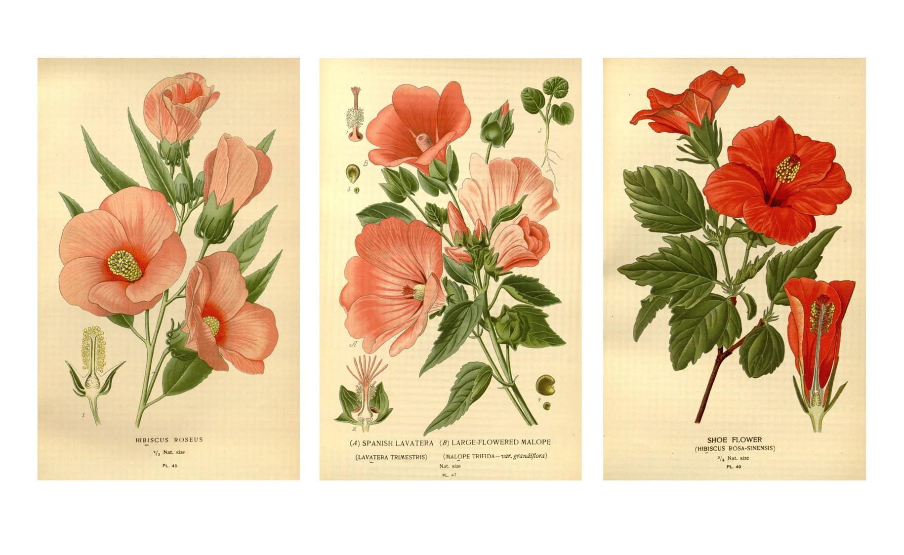 Tropical Flower Prints Botanical Illustrations Hawaiian