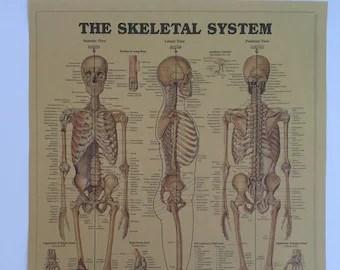 skeleton poster etsy