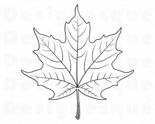 outline leaf maple svg clipart clip autumn cricut