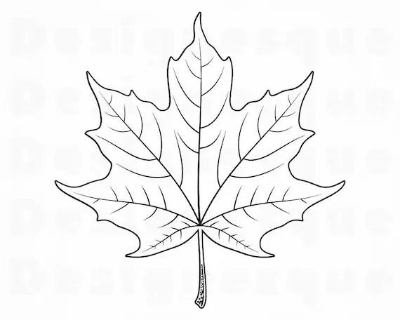 Maple Leaf Outline Svg Maple Leaf Svg Autumn Svg Maple Leaf Etsy