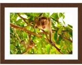 Framed Monkey Print - Wid...
