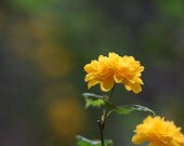 Yellow Flowers / Blank Greeting Card / Note Card / Nature / Photography