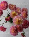 Pretty In Pink Dahlias Styled Stock Photo Bundle 12 Branding Etsy