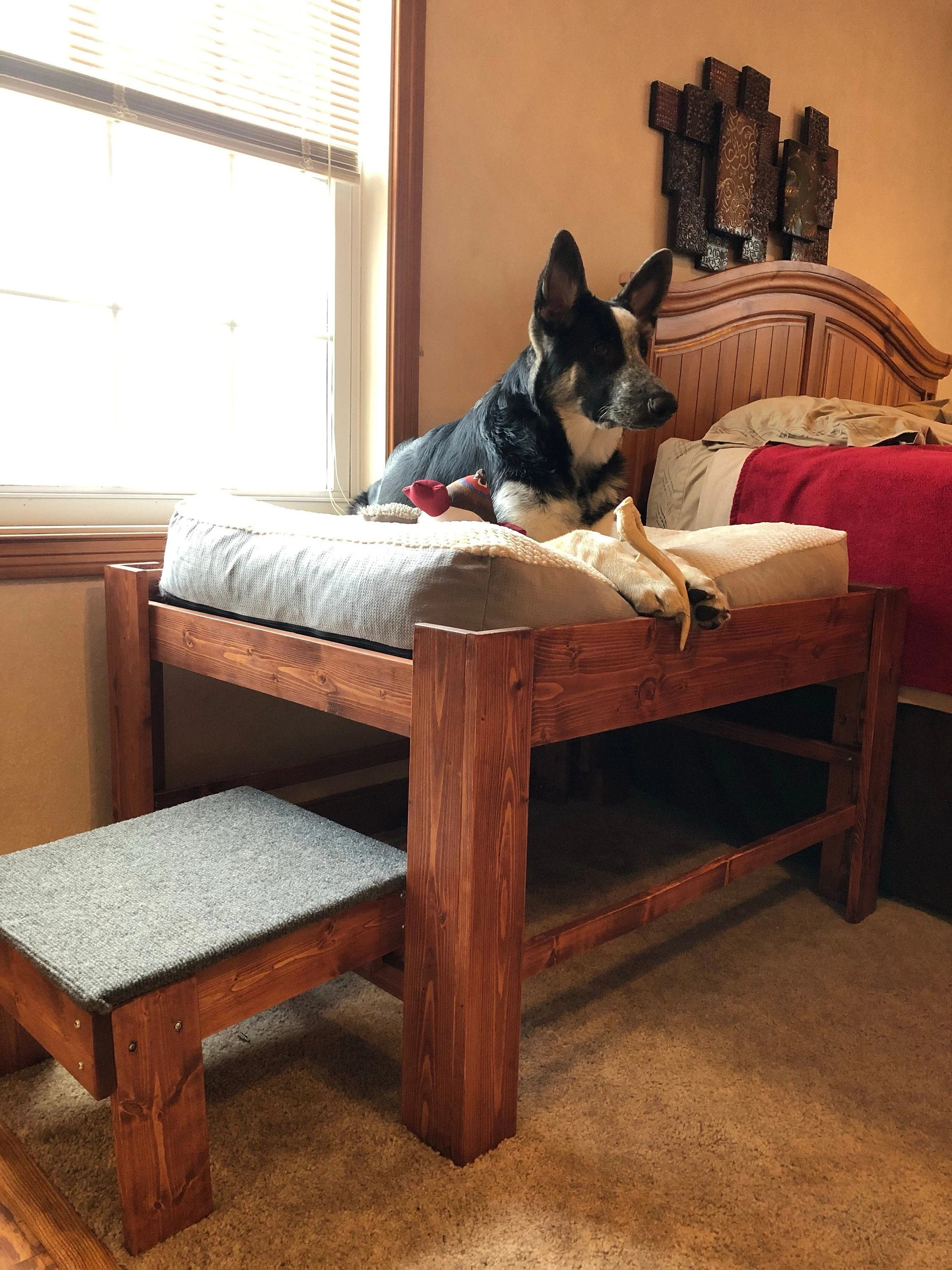 Dog Ramps & Stairs You'll Love in 2021 | Wayfair