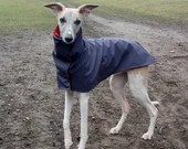Individual Raincoat Whippet Dog coat configure itself