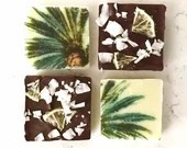 Coconut lime chocolate squares