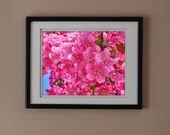 Pink Blossom Tree photography print