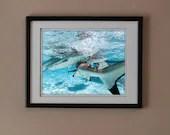 Sharks photography print