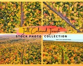 Fall Color Forest Stock Photo Collection