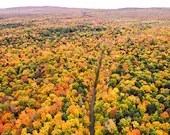 Aerial Shot of Fall Colored Forest
