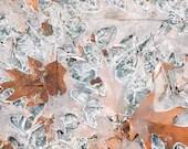 Frozen Fall Leaves