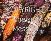 Autumn Multi Colored Corn