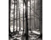 Foto Wald, schwarz weiß Wandbild, Fine Art Fotografie schwarz weiß, Baum Fotografie, Druck Natur, Fotografie Kunstdruck, Baum Fotografie