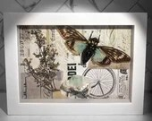 Tosena Splendida Cicada, Dried Floral, and Rock/Mineral Mixed Media in Shadow Box Frame