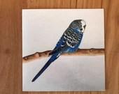 Double card - Parakeet