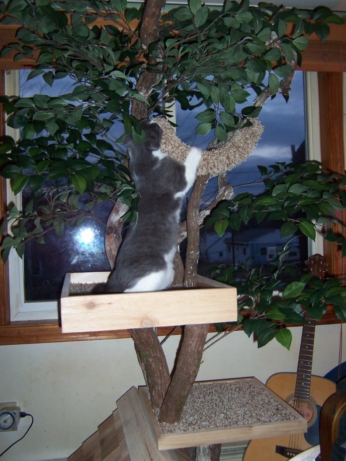 Adult medium Cat Tree House image 3