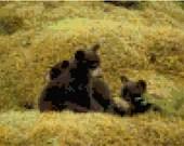 Cross stitch black bear cubs in a field pdf pattern