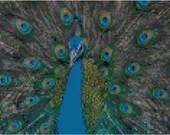 Cross stitch peacock pdf pattern