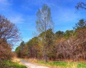 Dirt road thru the landscape surrounded by trees print,  nature and landscape,outdoor landscape,outdoor trails,outdoor photos,tree landscape