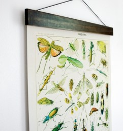 pull down chart insects diagram reproduction canvas print le petit larousse french encyclopedia by millot entomology bugs [ 1231 x 1500 Pixel ]