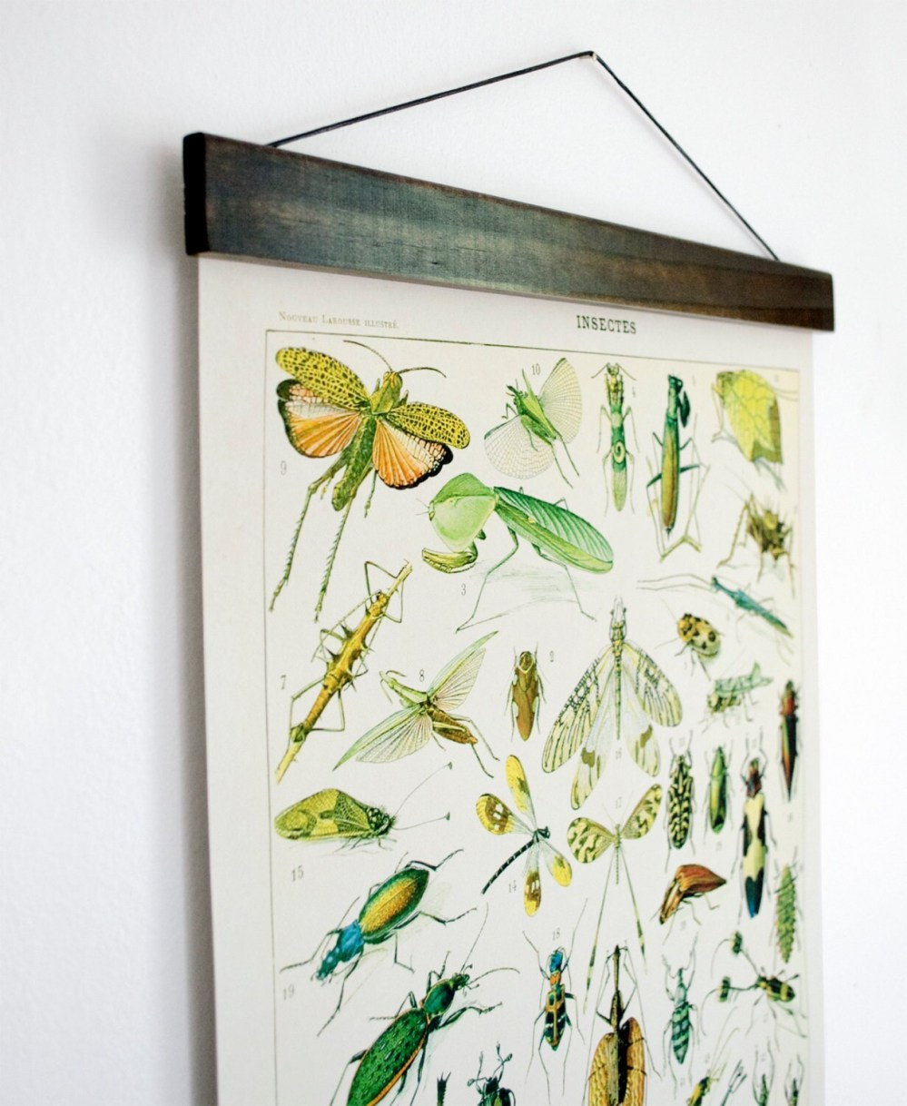 medium resolution of pull down chart insects diagram reproduction canvas print le petit larousse french encyclopedia by millot entomology bugs